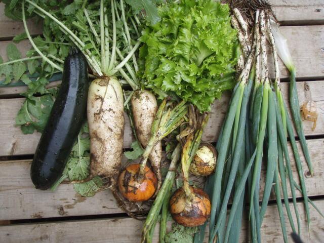 有機農産物(有機大根・ネギ・玉ねぎなど)